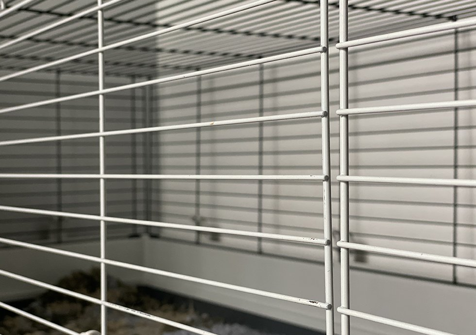 A cage for my rabbit
