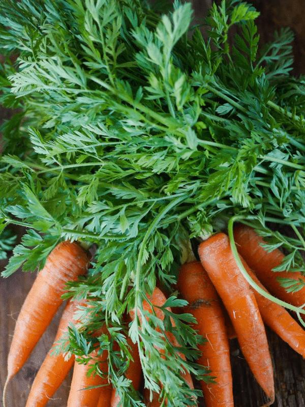 Dwarf rabbit vegetables