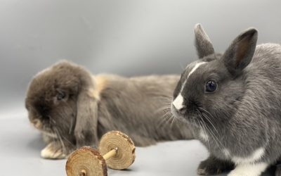 Which rabbit to adopt?