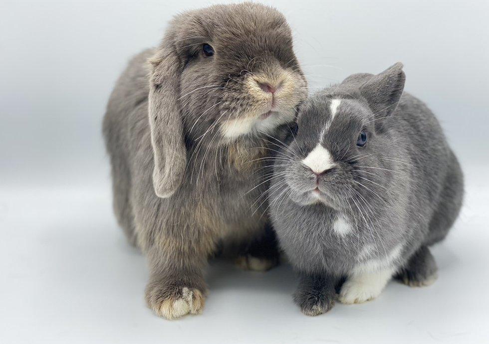 rencontre entre 2 lapins nains site de rencontre gratuit pour telephone mobile