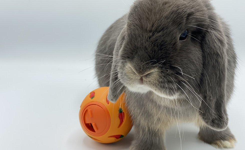 Rabbit toy ball
