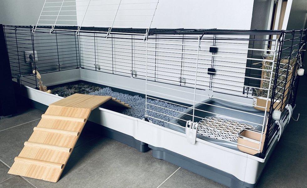 Dwarf rabbit cage