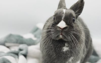 Communicate with your rabbit
