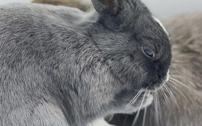 A bath for my rabbit?