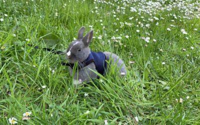 Fighting parasites in the dwarf rabbit