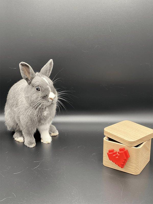 Nowlapins dwarf rabbit habitat