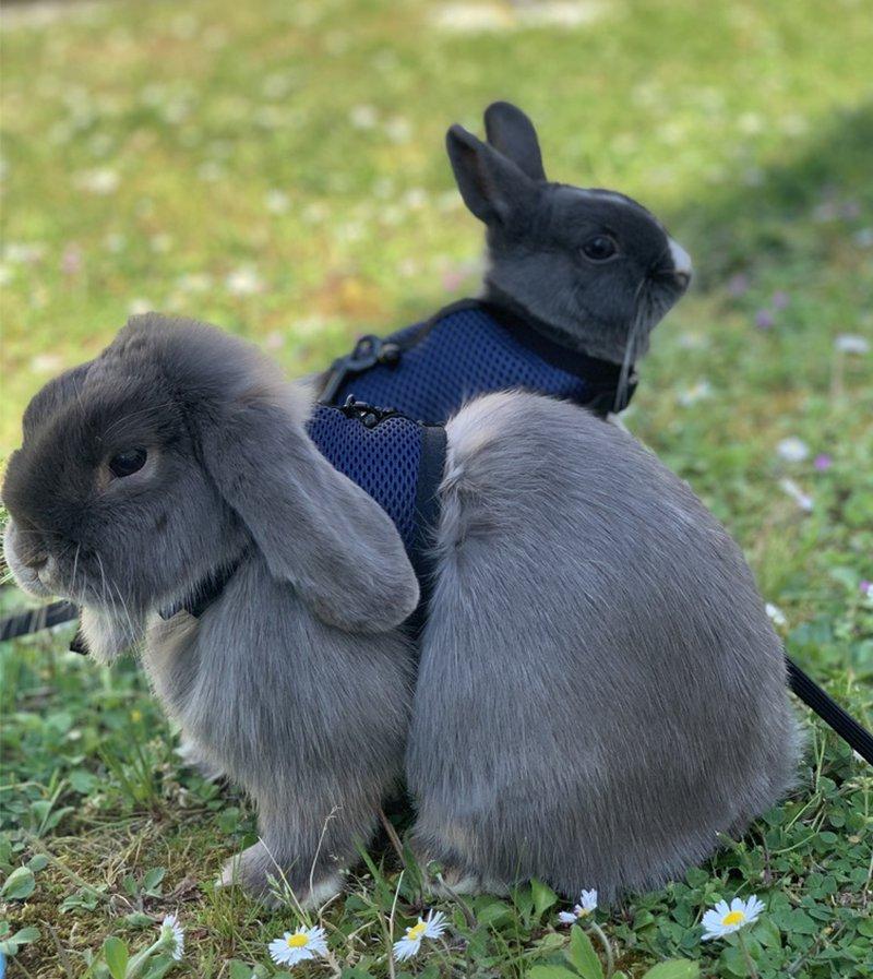 Dwarf rabbit garden
