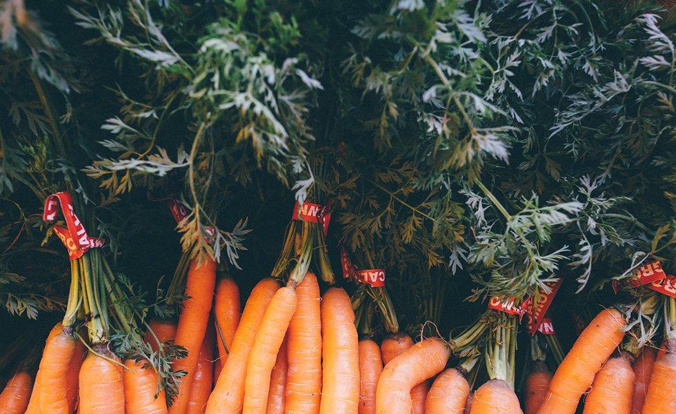 nowlapins,rabbit,dwarf rabbit,dwarf bunny,bunny care,vegetables rabbit,start-with-vegetables
