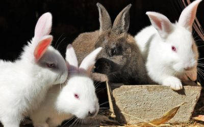 List of rabbit associations and shelters
