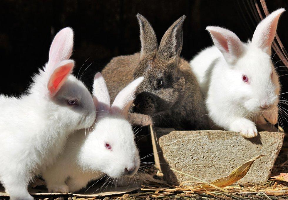 Lapin Bunny Care Association Shelter Refuge Lapin nain