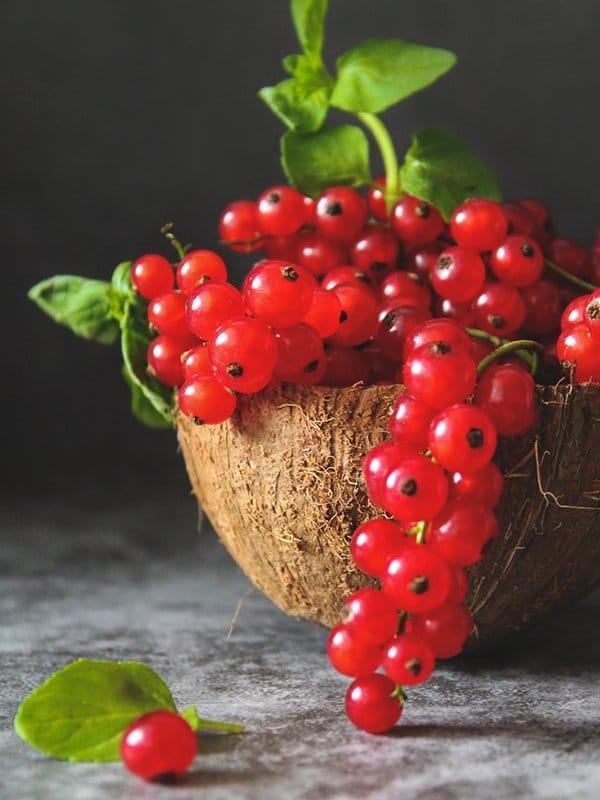 Lapin Nain Fruit Groseille redcurrant