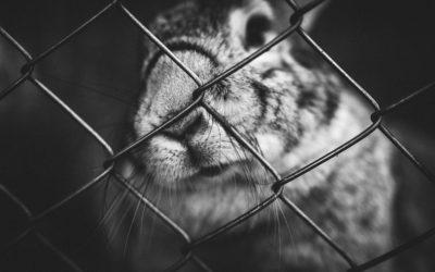 Witness of mistreatment of dwarf rabbits