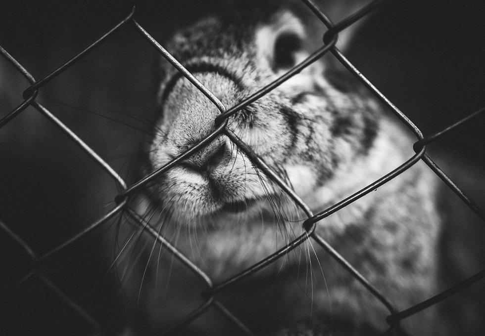 Lapin Nain Maltraitance Dwarf Rabbit abuse