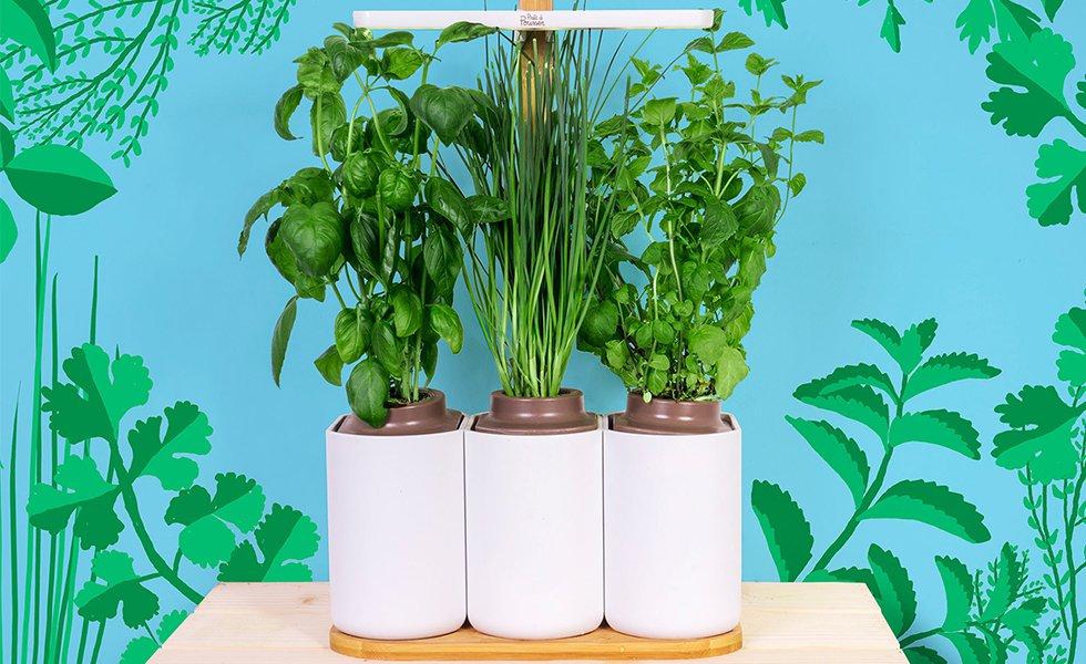 Nowlapins Potager Lilo Connecté Légumes Herbes Plantes Lapin Nain