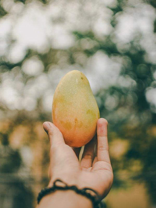 Lapin Nain Fruit Mangue Mango