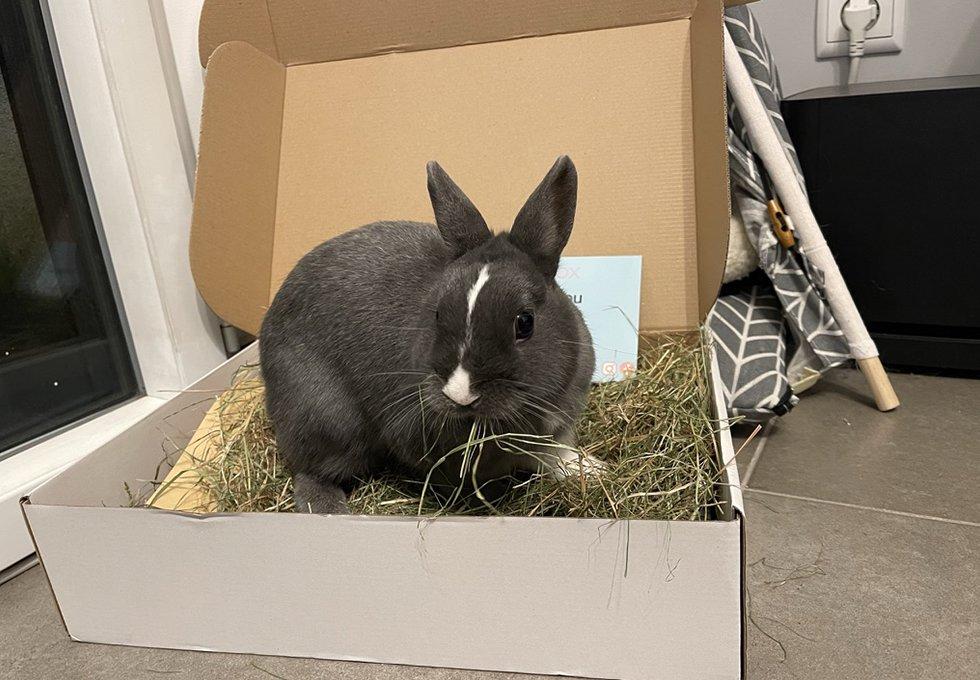 Rabbit Lapin Box Foin Hay