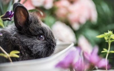 Is the rabbit a loving animal?