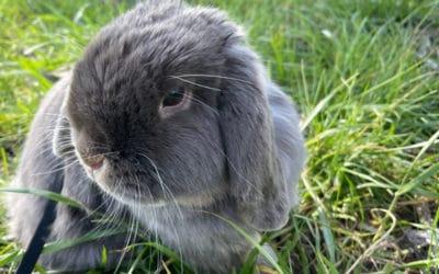 My rabbit in a garden
